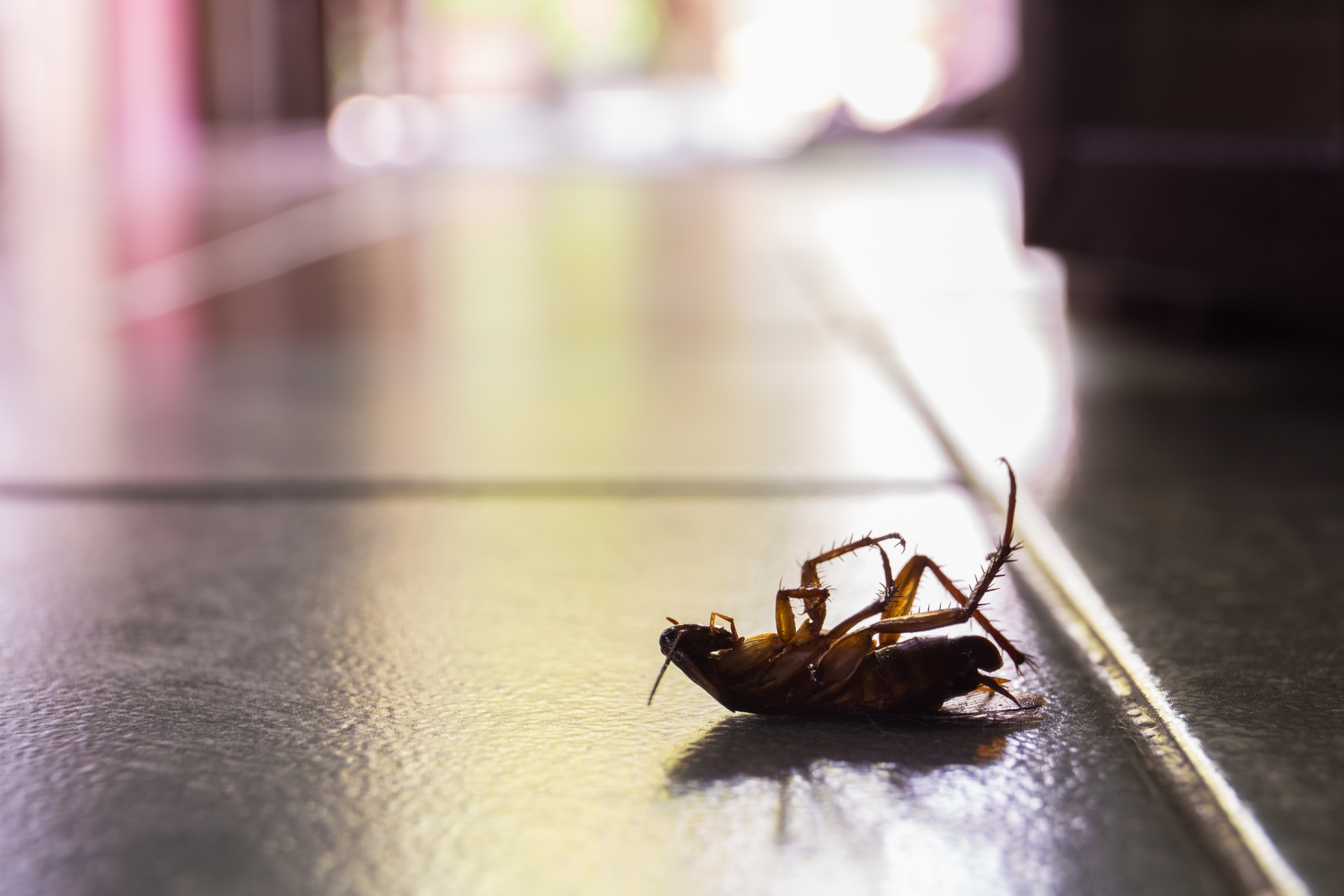 Cockroach Control, Pest Control in Caterham, Chaldon, Woldingham, CR3. Call Now 020 8166 9746