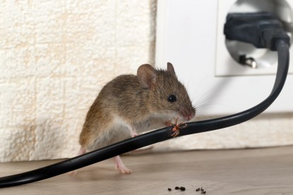 Pest Control in Caterham, Chaldon, Woldingham, CR3. Call Now! 020 8166 9746