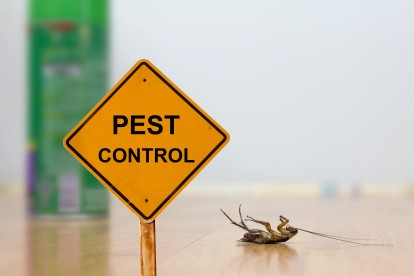 Pest Contol in Caterham, Chaldon, Woldingham, CR3. Call Now 020 8166 9746