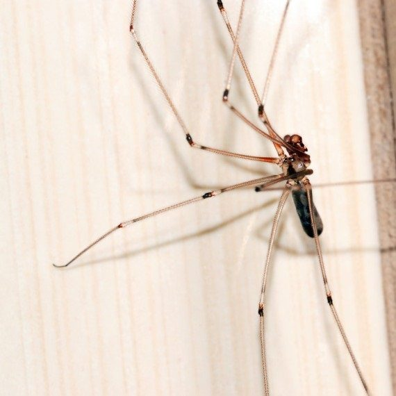 Spiders, Pest Control in Caterham, Chaldon, Woldingham, CR3. Call Now! 020 8166 9746